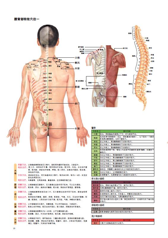身体背部骨骼结构图